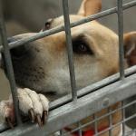 Tinejdžer spasava životinje - Tinejdžer spasava životinje