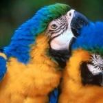 Naučiti papagaja da govori - Naučiti papagaja da govori