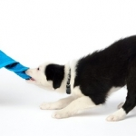 Naučite psa da ne dira stvari - Naučite psa da ne dira stvari