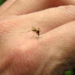 Šta sve privlači komarce? - Šta sve privlači komarce