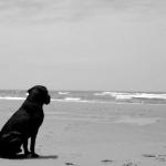 Otkriće o psećoj memoriji - Otkriće o psećoj memoriji