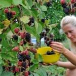 Po čemu je specifično naše voće - Po čemu je specifično naše voće