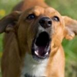 Agresivno ponašanje pasa - Agresivno ponašanje pasa