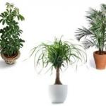 Biljke vrše matematičke proračune - Biljke vrše matematičke proračune