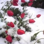 Sutra hladno, kiša i sneg -
