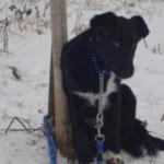 Zabrana držanja životinja - Zabrana držanja životinja