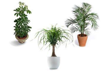 Biljke vrše matematičke proračune - cveće koje pročišćava vazduh u prostoriji