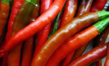 Pod jedan: Papričice - ljute papri;ice koje nestaju