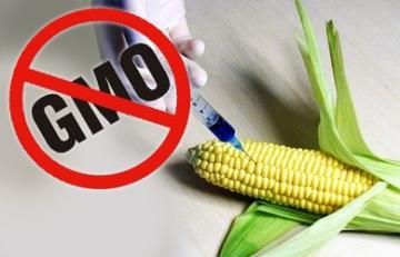 I Kruševac protiv uzgoja GMO - I Kruševac protiv uzgoja GMO